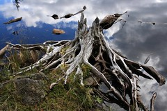 [フリー画像] 自然・風景, 樹木, 湖・池, 201109280700