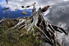 [Free Image] Nature / Landscape, Trees, Lake, 201109280700