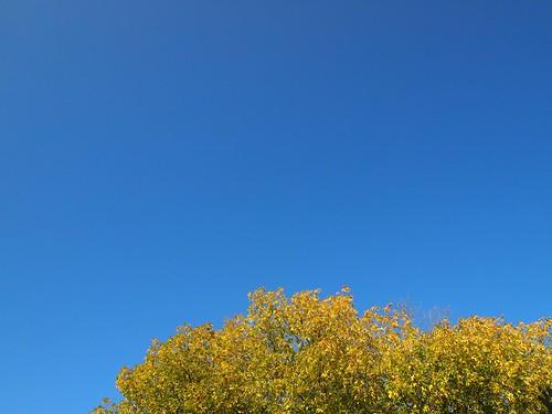 a sunny walk : the sky