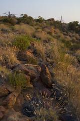 mawson plateau - sept 2011 - bz (liam.jon_d) Tags: wild mountain landscape bush walk plateau south north australian australia hike ranges remote hikers sa wilderness trak northern southaustralia walkers sanctuary flinders mawson flindersranges treking arkaroola arkaroolawildernesssanctuary southaustralian billdoyle mawsonplateau