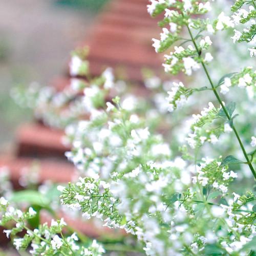 august, in the garden