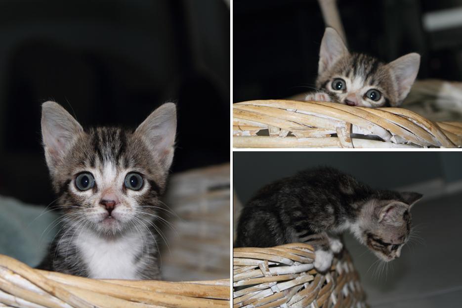 092111_kittens16