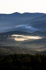 朝靄が流れる