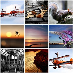 250,000 views — my most commented photos (smiscandlon) Tags: autumn london history cemetery rose museum sunrise pier spider team fdsflickrtoys squirrel allen natural gothic wing airshow international most views edgar walkers poe biplane sunderland roker commented breitling 250000