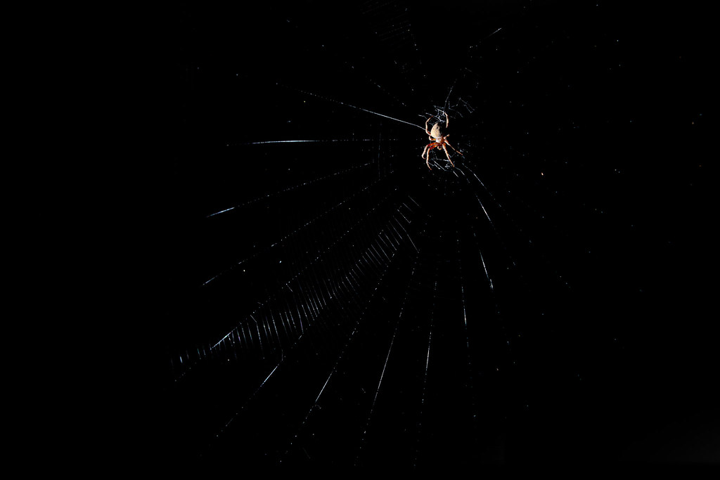 Spider, at night (2)