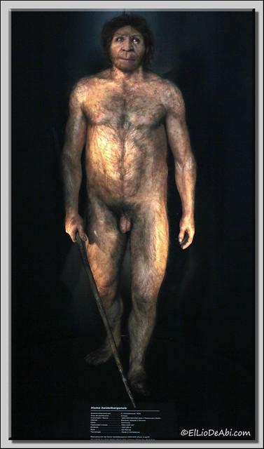 Museo Evolución Humana 37