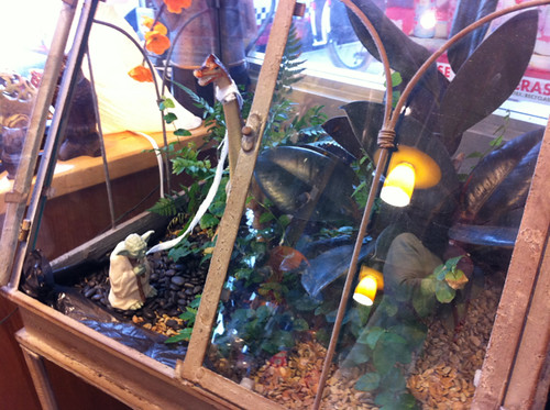 Yoda terrarium at Powell's on Hawthorne (the cooking/crafty/garden store)