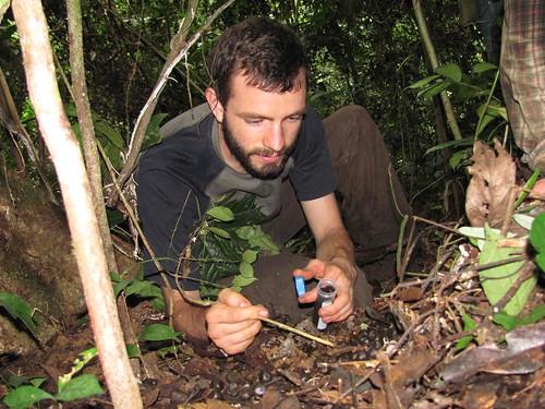David collecting Okapi dung