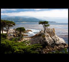 The Lone Cypress (Nrbelex) Tags: california ca bw tree water canon 2470mml rocks pacific pacificocean shore pebblebeach lonecypress 17miledrive cypress dslr cp polarizer westcoast circularpolarizer cypresstree 2470mm seventeenmiledrive 2470mmf28 xti ef2470mm 400d bwcircularpolarizer pebblebeachcalifornia pebblebeachca nrbelex
