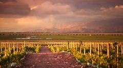 Los caminos del vino tuvieron en 2010 más de un millón de visitas
