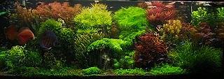 saltwater biotope
