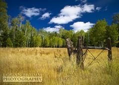 Beginning of Fall -  Flagstaff, Arizona (Lo