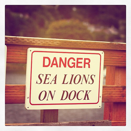 Danger Sea Lions