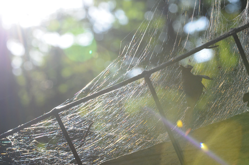 Spiderweb in the Sun at Golden Hour