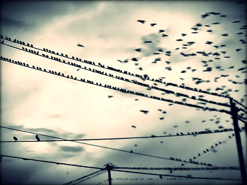 113/365- The birds by elineart