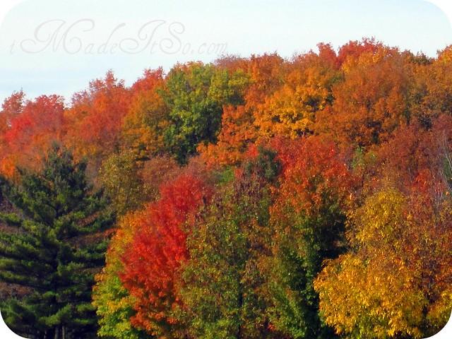 fall trees unreal