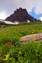 Wildflowers at Logan Pass (thephantomhennes) Tags: road park sun mountain color sunrise landscape mt meadow glacier national wildflowers hennes 1022 manfrotto yahoo:yourpictures=landscape