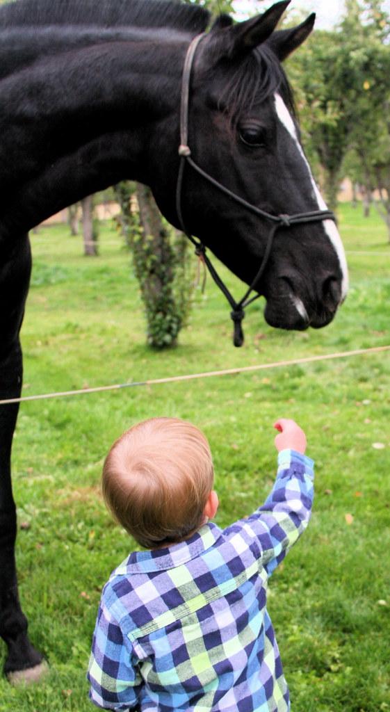 """Nice Horsey"""
