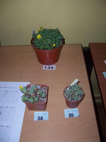 BCSS Birmingham Oct Show Plants