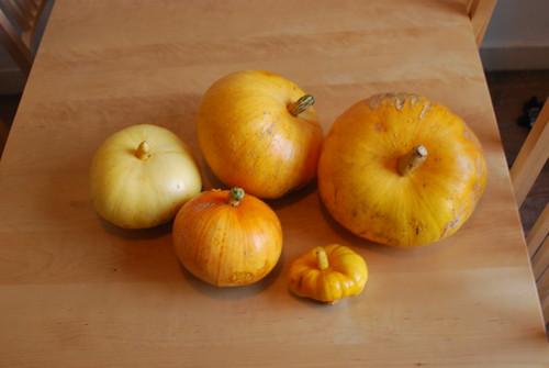 This year's pumpkin harvest