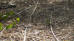 DSC02289 (Robin Vázquez Fotografía) Tags: trees nature garden spain jardin scene andalucia spanish cadiz vegetation andalusia dela frontera jerez escenico jardinescenico