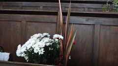 "Flower Festival Sept 2011_15 • <a style=""font-size:0.8em;"" href=""http://www.flickr.com/photos/62165898@N03/6146187985/"" target=""_blank"">View on Flickr</a>"
