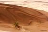 Desert Contrasts (hannes.steyn) Tags: africa nature canon landscapes sand scenery desert dunes getty namibia reserves namib namibdesert canonef70300mmf456isusm 450d canon450d hannessteyn eosdigitalrebelxsi namibnaukliftpark gettyimagesmeandafrica1