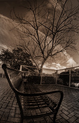 The arrival of Autumn (Junior Henry.) Tags: autumn tree fall monochrome sepia bench sad florida miami branches springs 8mm dri rokinon