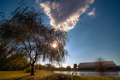 A Day By the Pond (Proleshi) Tags: blue sky naturaleza brown lake tree green nature water beautiful grass clouds skyscape arbol pond day natural awesome scenic windy tranquil hdr lanscape josephs jamal multipleexposures puffywhiteclouds proleshi