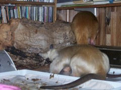 Pua and Aurora share a log