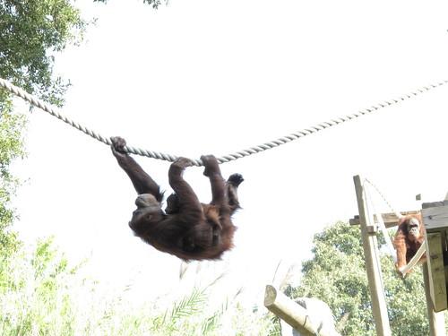 Zoo 0353