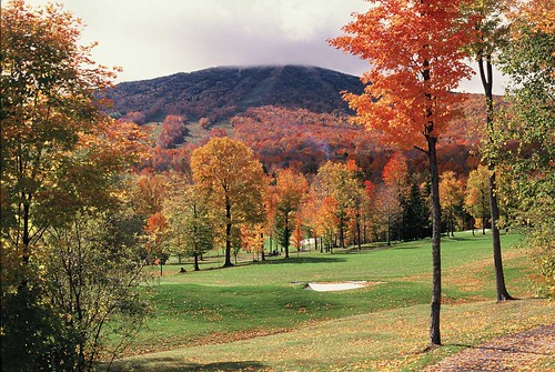 Stratton Foliage - Photo: Hubert Schriebl