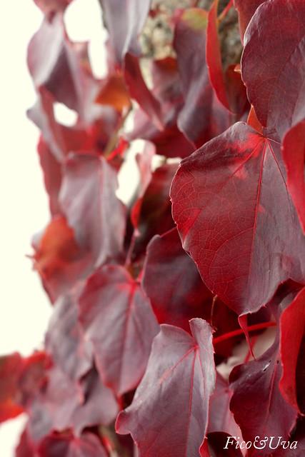 Foglie rosse d'autunno