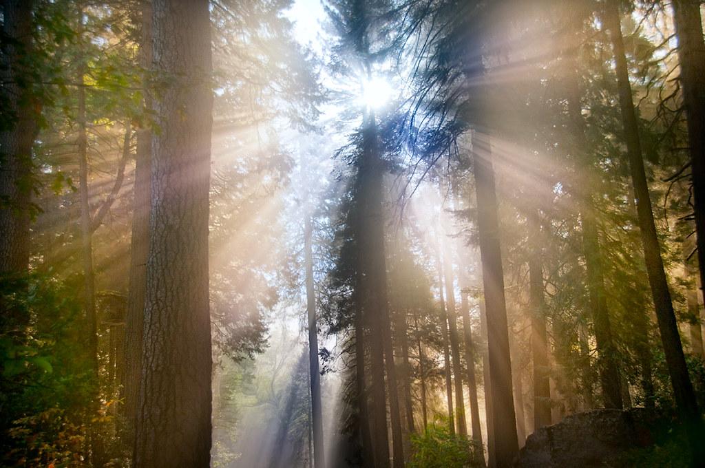 Forest Sonata © Harold davis