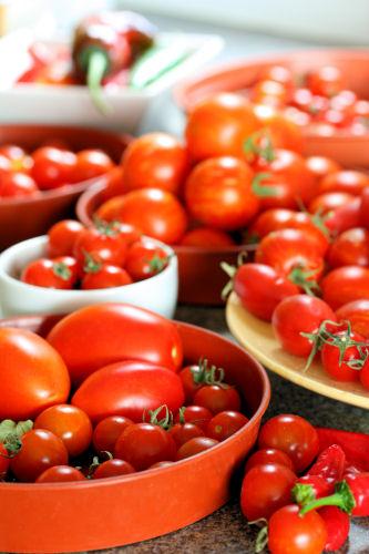 tomato glut 2849 R