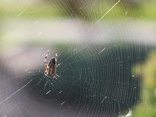 Spider Web by shoemap
