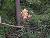 森に佇むベッカンコの神様