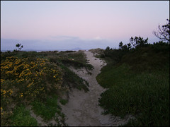 Path to Bream Bay beach