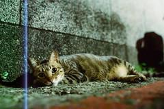 M (Huzi Li) Tags: cat iso800 35mmfilm nikonf3   35mmf14  lomofilm