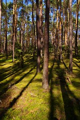 Trees and shadows (PabloClavo) Tags: trees nature forest pentax poland kampinos tamron1750 k100d pentaxart