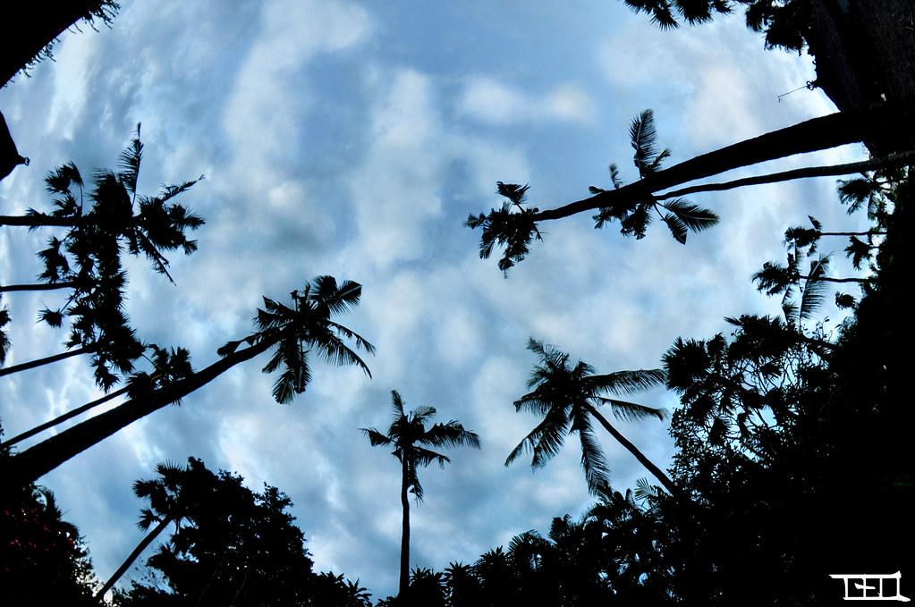 Bali palm trees FishEye - Teo Morabito