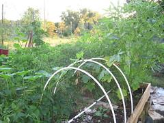 garden, sept 2011 009