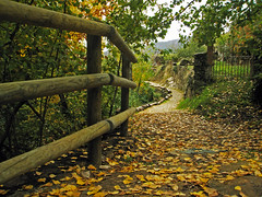 Golden carpet (Walimai.photo) Tags: autumn fall leaves hojas spain camino path olympus otoo cceres sendero baosdemontemayor thechallengefactory mju820