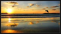 Herzliya reflection (Polis Poliviou) Tags: city sunset sea lighthouse seascape bird beach canon coast israel sand september romantic masterpiece seaview polis herzliya shootingstar brilliantphoto amazingphoto telavivdistrict colorphotoaward totallyunique flickroid afiap arenabeach superaward creativeyeuniverse poliviou polispoliviou fotowow הֶרְצְלִיָּה