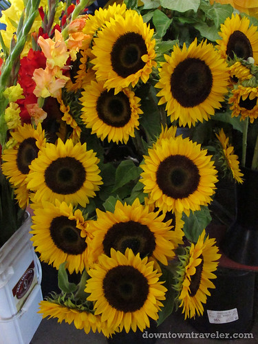 Sunflowers at Jean Talon market in Montreal