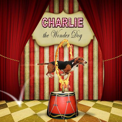 Charlie the circus dog