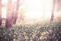 In the forest (xibalbax) Tags: flowers trees sunlight forest canon 50mm woods dof 7d canonef50mmf18ii canoneos7d