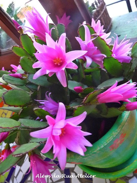 Flor de Outubro