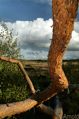 elstead (justyourcofchi) Tags: uk blue autumn england sky tree clouds landscape dead model flickr photographer charlotte arnold chi bark fir moat farnborough elstead chiarnold justyourcupofchicom justyourcupofchi