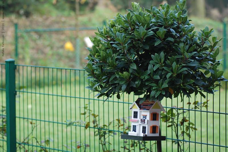 Bird house in our garden